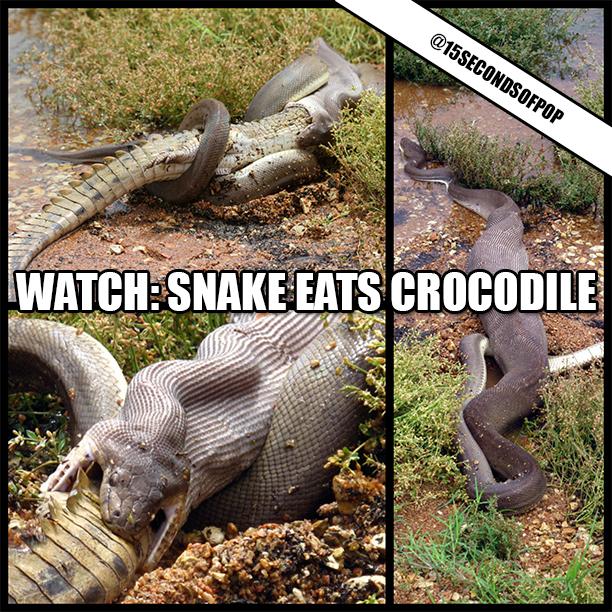 Crocodile Snake for Pinterest